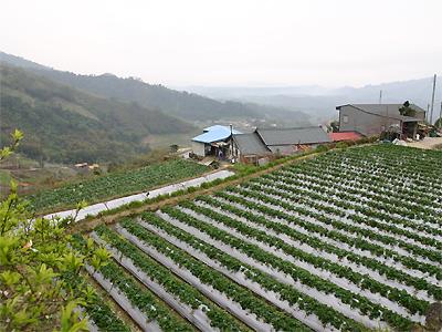大湖‧馬拉邦山秀麗草莓農莊